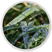 Round Beach Towel featuring the photograph Morning Dew On Grass by Scott Lyons