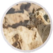 Mountain Sheep In Badlands National Park Round Beach Towel