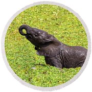 Round Beach Towel featuring the photograph Mud Bath by Kay Brewer