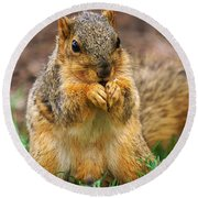 Munching Cute Fox Squirrel Round Beach Towel
