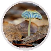 Mushroom Under The Oak Tree Round Beach Towel