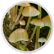 Mushrooms Round Beach Towel
