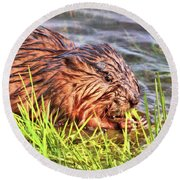 Muskrat Munchies Round Beach Towel