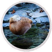 Napping At The Pond Round Beach Towel