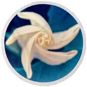 Round Beach Towel featuring the photograph Nature's Pinwheel - Sacred Datura by Judy Kennedy