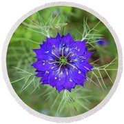 Nigella Damascena Flower Round Beach Towel