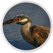 Night Heron Portrait Round Beach Towel