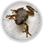 Round Beach Towel featuring the photograph Ninja Frog by Vincent Autenrieb