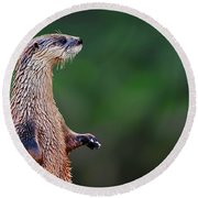 Norman The Otter Round Beach Towel