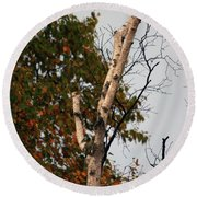 Round Beach Towel featuring the photograph Northern Hawk Owl 101402 by Rick Veldman