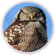 Northern Hawk-owl Round Beach Towel