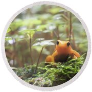Round Beach Towel featuring the photograph Orange Frog. by Anjo Ten Kate