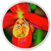 Orchid Study Seven Round Beach Towel