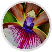 Orchid Study Two Round Beach Towel