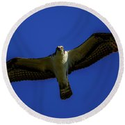 Osprey Glide In Blue Round Beach Towel