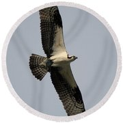 Round Beach Towel featuring the photograph Osprey With Fish by Rick Veldman