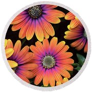 Osteospermum Purple Sun Flower Pattern Round Beach Towel
