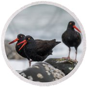 Oystercatchers In The Rain Round Beach Towel