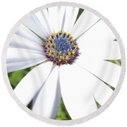 Page 13 From The Book, Peace In The Present Moment. Daisy Brilliance Round Beach Towel