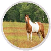 Paint Horse In Meadow Round Beach Towel