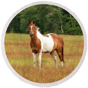 Paint Horse In Pasture Round Beach Towel