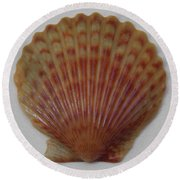 Painted Scallop Shell No 21 Round Beach Towel