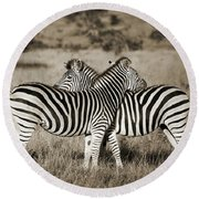 Perfect Zebras Round Beach Towel