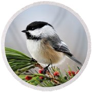 Pine Chickadee Round Beach Towel