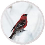 Pine Grosbeak In The Snow Round Beach Towel