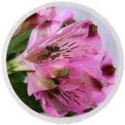 Pink Alstroemeria-4 Round Beach Towel