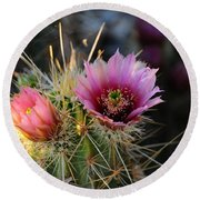 Pink Cactus Flower Round Beach Towel