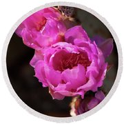Round Beach Towel featuring the photograph Pink Cactus Flowers 2 by Tatiana Travelways
