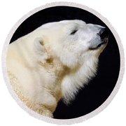 Round Beach Towel featuring the photograph Polar Bear by Dan Miller