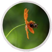 Round Beach Towel featuring the photograph Pollinating The Cosmos by Dale Kincaid