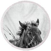 Pony Foal Round Beach Towel