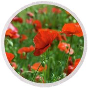 Poppies In The Field Round Beach Towel