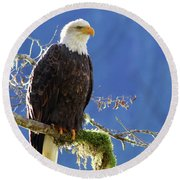 Portrait Of A Backlit Bald Eagle In Squamish Round Beach Towel