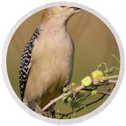 Portrait Of A Golden-fronted Woodpecker Round Beach Towel