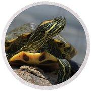 Portrait Of A Turtle Round Beach Towel