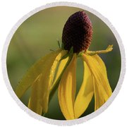 Round Beach Towel featuring the photograph Prairie Coneflower by Dale Kincaid