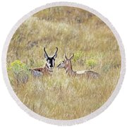 Pronghorn Antelope Love Round Beach Towel