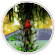 Proud Male Cardinal Round Beach Towel