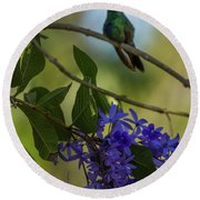 Purple Blossoms And Hummingbird Round Beach Towel