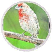 Purple Finch, Animal Portrait Round Beach Towel
