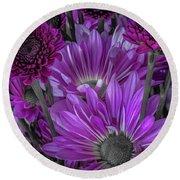 Purple Power Chrysanthem Selective Colorum  Round Beach Towel