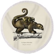 Pygmy Anteater  Cyclopes Didactylus  Illustrated By Charles Dessalines D' Orbigny  1806-1876 . Round Beach Towel