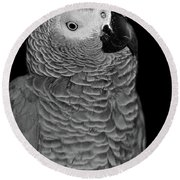 Quizzical African Grey Round Beach Towel