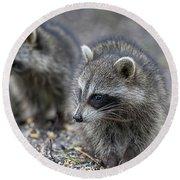 Raccoon Siblings Round Beach Towel