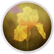 Radiant Yellow Iris With A Vintage Touch Round Beach Towel