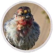 Rare Multicolored Male House Finch Round Beach Towel